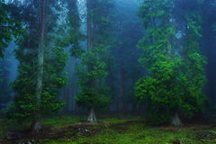 Dark forest Royalty Free Stock Photography