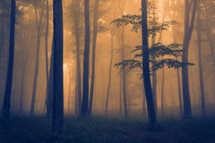 Dark forest landscape with fog Stock Photo