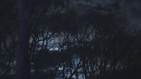 Dark Forest Landscape At Night stock video footage