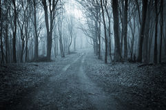 Dark forest in late autumn Stock Photo