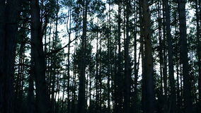 The dark forest. stock footage