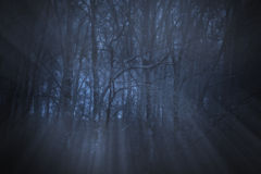 Dark forest. Magical deep foggy forest at night with moonbeams Stock Image