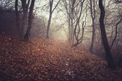 Misty morning in a dark autumn forest Royalty Free Stock Photo