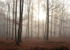 Dark forest Stock Image