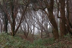 Dark forest Stock Images