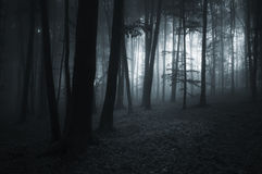 Dark forest at night Royalty Free Stock Photo
