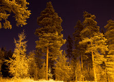 Dark forest in the night Royalty Free Stock Photo
