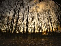 Dark forest in Obrenovac. Serbia during sunset over the pond in Zabran. Tree silhouette over sky royalty free stock photography