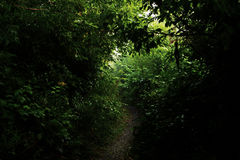 Dark forest path Stock Images