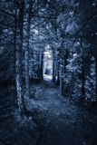 Dark Forest Path - Infrared. Photographed with a 665nm near infrared converted camera, of a dark surreal forest path Royalty Free Stock Photo