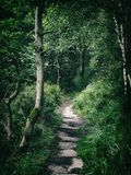 Dark forest pathway in dense thick woodland. With sunlight breaking through Stock Photo