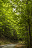 Dark forest road Royalty Free Stock Image