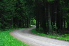 Dark forest road Royalty Free Stock Images