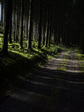 Dark forest road. Dark forest, with green moss grounds and a path or pike, diagonally in view, with sunlight falling in from the left Stock Photography