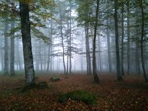 Forest in the morning fog stock image
