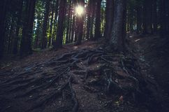 The dark forest and the shining sun royalty free stock image
