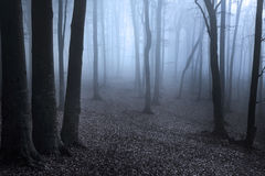 Dark forest with silhouette trees and blue fog Royalty Free Stock Photos