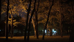 Dark forest with silhouetted trees illuminated by lantern at public park at night. Ppeople at background. Dark forest with silhouetted trees illuminated by stock footage