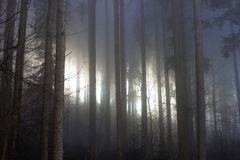 Dark forest with sun shining through the fog royalty free stock photo