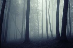 Dark forest with thick mysterious fog Royalty Free Stock Images