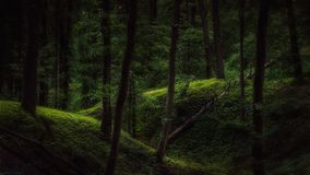 Dark forest with a touch of light. During summertime evening royalty free stock photos