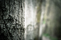 Dark forest Royalty Free Stock Photos