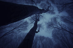 Dark forest with trees reaching up in the canopy on halloween Stock Photos