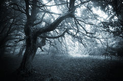 Dark forest with twisted mysterious tree and fog Royalty Free Stock Photo