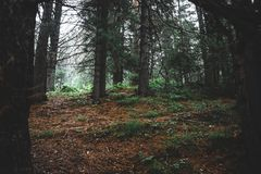 In the dark forest. View of the beautiful location in dark misty forest stock photo