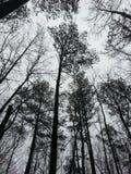Dark forest. Walk through the woods Stock Photo