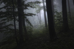 Dark forest with white flowers in clearing royalty free stock photos