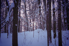 Dark Forest in Winter Night Stock Photography