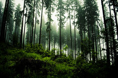 Dark forrest. On evening time royalty free stock photography