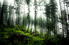 Dark forrest. On evening time stock images