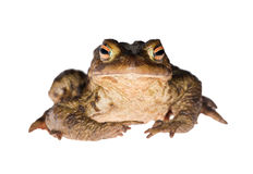 Dark frog gaze Stock Photos