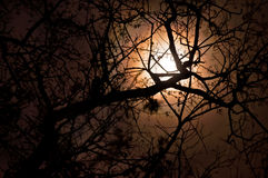Dark full moon in the branches of trees Stock Photography