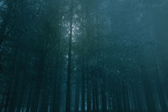 Dark Full moon forest Royalty Free Stock Photos