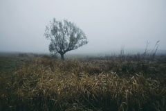 Dark gloomy autumn misty day on the field with lonely tree Stock Photography