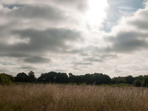Dark and gloomy dawn in a field royalty free stock photo