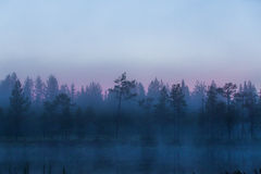 Dark and gloomy Forest scene in Finland with lake and mist Royalty Free Stock Images