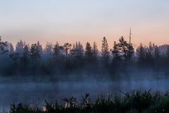 Dark and gloomy Forest scene in Finland with lake and mist Royalty Free Stock Photos