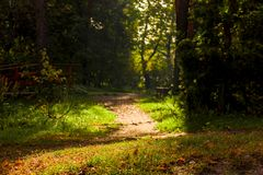 Dark gloomy landscape - a forest path. In the autumn forest royalty free stock image