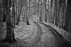 Dark gloomy winter forest  Stock Photo