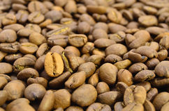 Dark and golden coffee beans. Close-up selected by the focus on placer of coffee Royalty Free Stock Photography