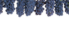 Dark grape Royalty Free Stock Image