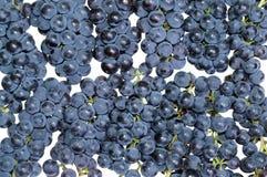 Dark grape Royalty Free Stock Photos