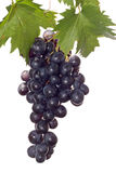 Dark Grape And Leaf Stock Images