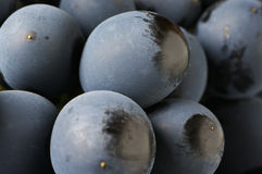 Dark grape close-up Royalty Free Stock Images