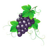 Dark grape Stock Image