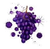 Dark grape with paint blots Stock Images
